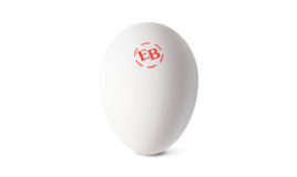Single Eggland's Best White Egg