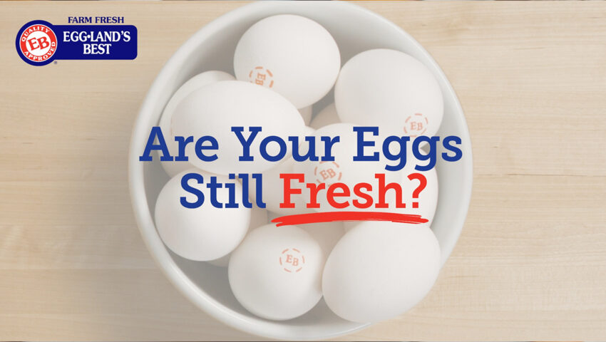 Youtube Cover Are Your Eggs Fresh