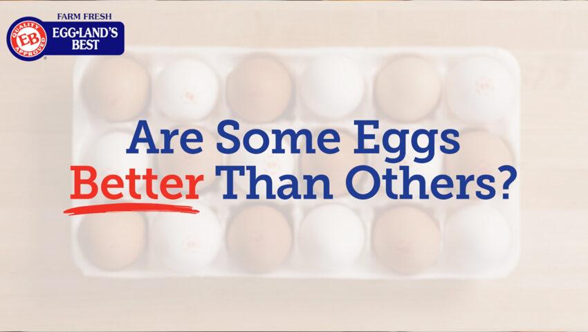 Youtube Cover better eggs