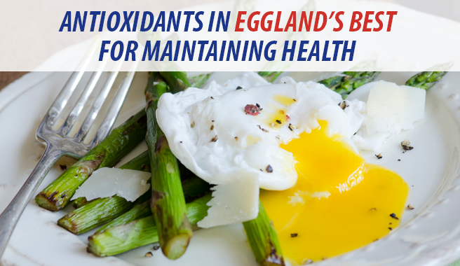 Antioxidants in Eggland's Best for Maintaining Health