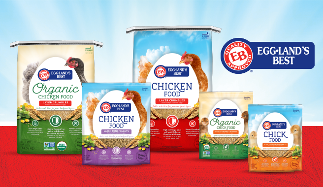 Eb Launches New Premium Chicken Food For Backyard Chickens News